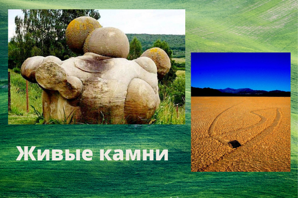 Живые камни. Реальность или фантастика?