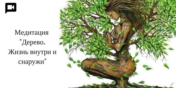 Медитация на чакры -Дерево. Жизнь внутри и снаружи
